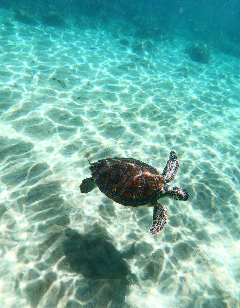 anse-dufour-martinique-nager-tortue-snorkelling